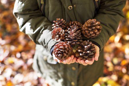 Van a kertben pár lehullott toboz? készítsd belőlük gyönyörű karácsonyi dekorációt